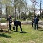 В Белой Церкви компания «РОСАВА» высадила аллеи деревьев в честь своего 45-летнего юбилея - фото 2