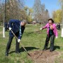 В Белой Церкви компания «РОСАВА» высадила аллеи деревьев в честь своего 45-летнего юбилея - фото 4